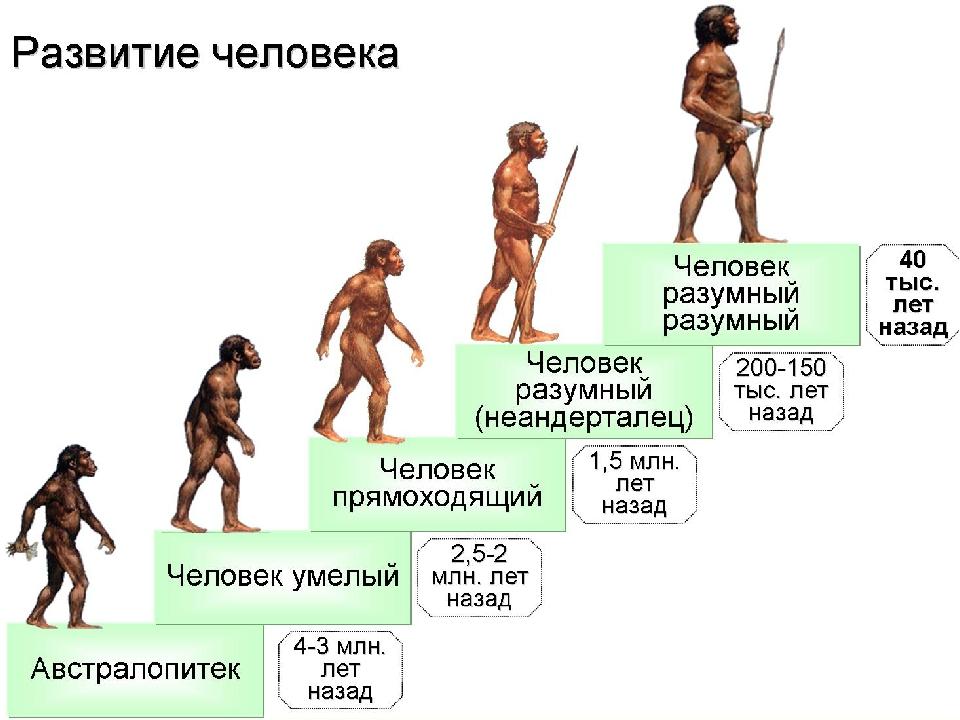 По эволюция человека гдз