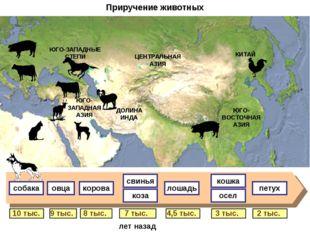 Приручение животных 9 тыс. 8 тыс. 7 тыс. 4,5 тыс. 3 тыс. 2 тыс. 10 тыс. свинь