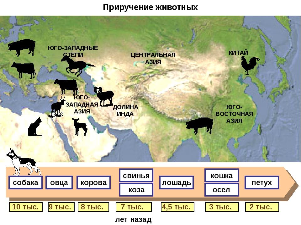 Приручение животных 9 тыс. 8 тыс. 7 тыс. 4,5 тыс. 3 тыс. 2 тыс. 10 тыс. свинь...