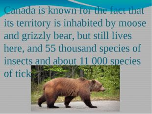 Canada is known for the fact that its territory is inhabited by moose and gri