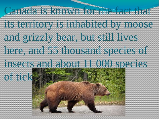 Canada is known for the fact that its territory is inhabited by moose and gri...