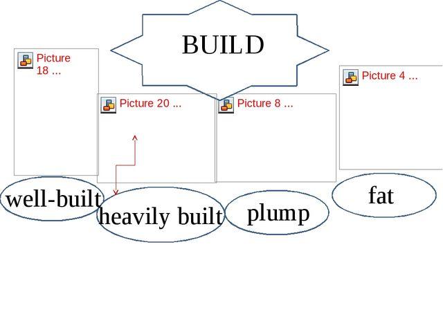 build BUILD well-built plump fat heavily built
