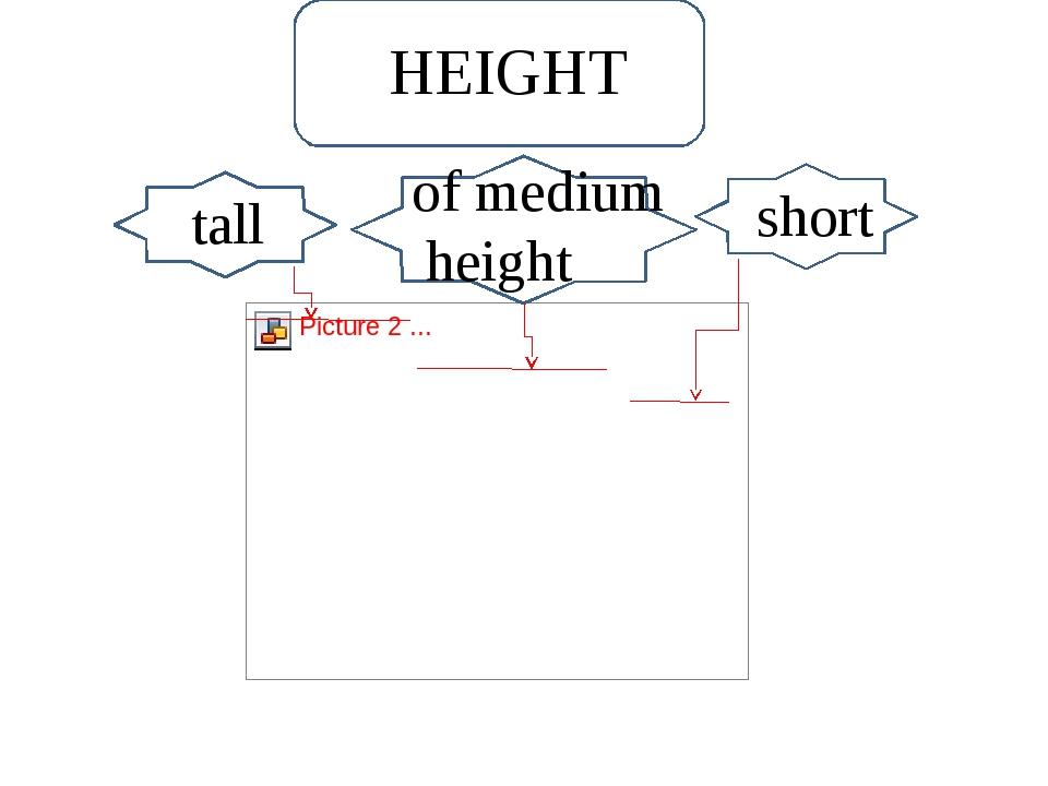 Short short tall of medium height HEIGHT