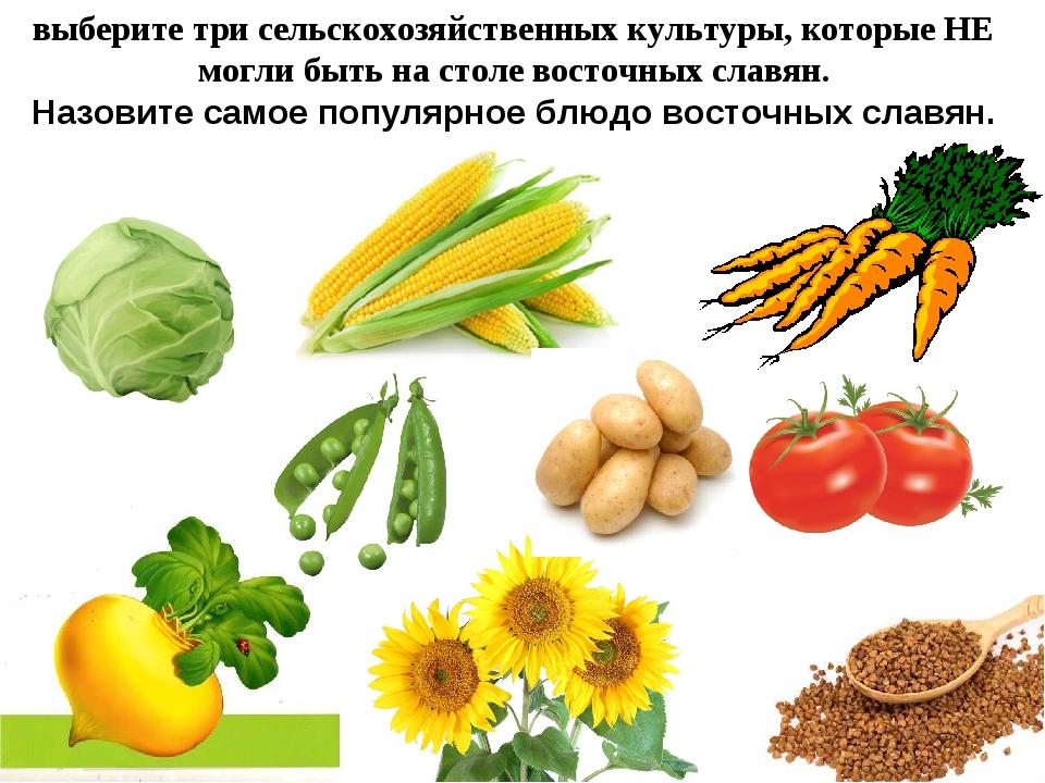 выберите три сельскохозяйственных культуры, которые НЕ могли быть на столе во...