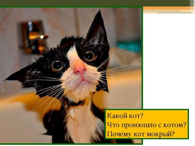 Какой кот? Что произошло с котом? Почему кот мокрый?