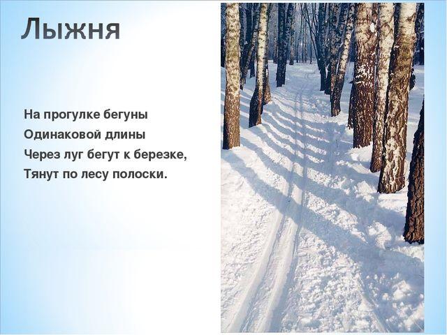 На прогулке бегуны Одинаковой длины Через луг бегут к березке, Тянут по лесу...