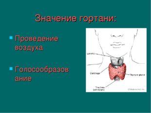 Значение гортани: Проведение воздуха Голосообразование