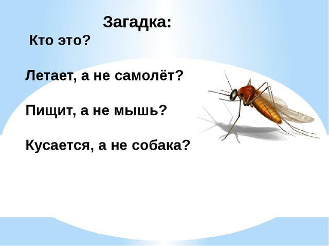 Загадка: Кто это? Летает, а не самолёт? Пищит, а не мышь? Кусается, а не соба...