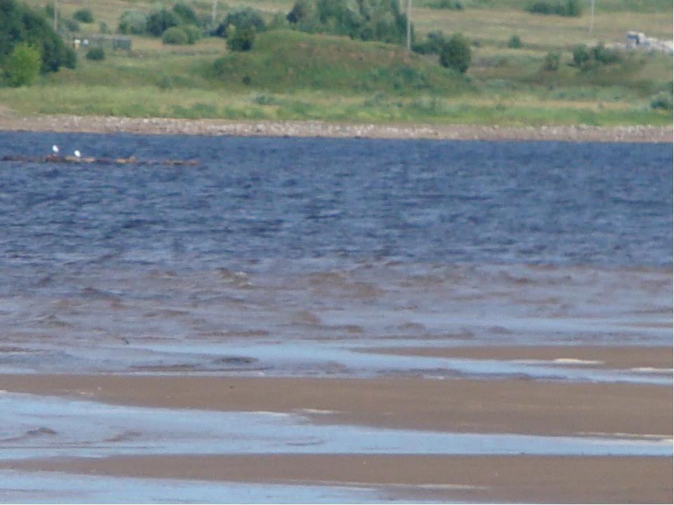 Вода отошла от берега на 30 метров.