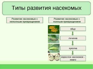 Типы развития насекомых яйцо личинка взрослое насекомое - имаго куколка Разви