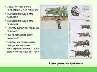 Цикл развития кузнечика Сравните взрослое насекомое и его личинку. Выявите ме