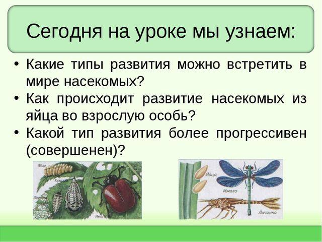 Сегодня на уроке мы узнаем: Какие типы развития можно встретить в мире насеко...