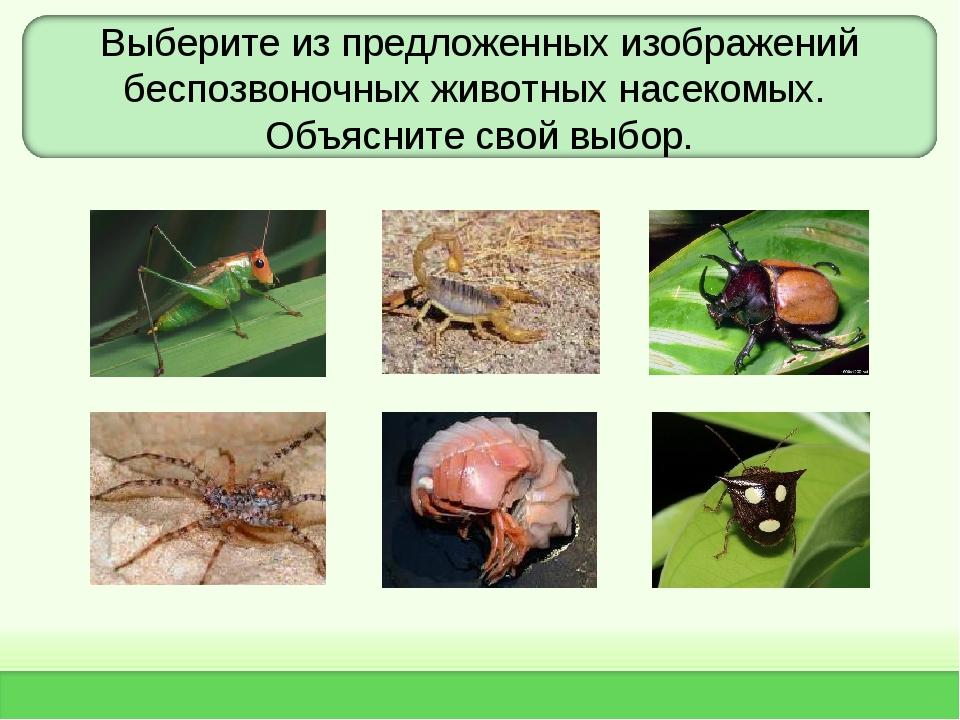 Выберите из предложенных изображений беспозвоночных животных насекомых. Объяс...