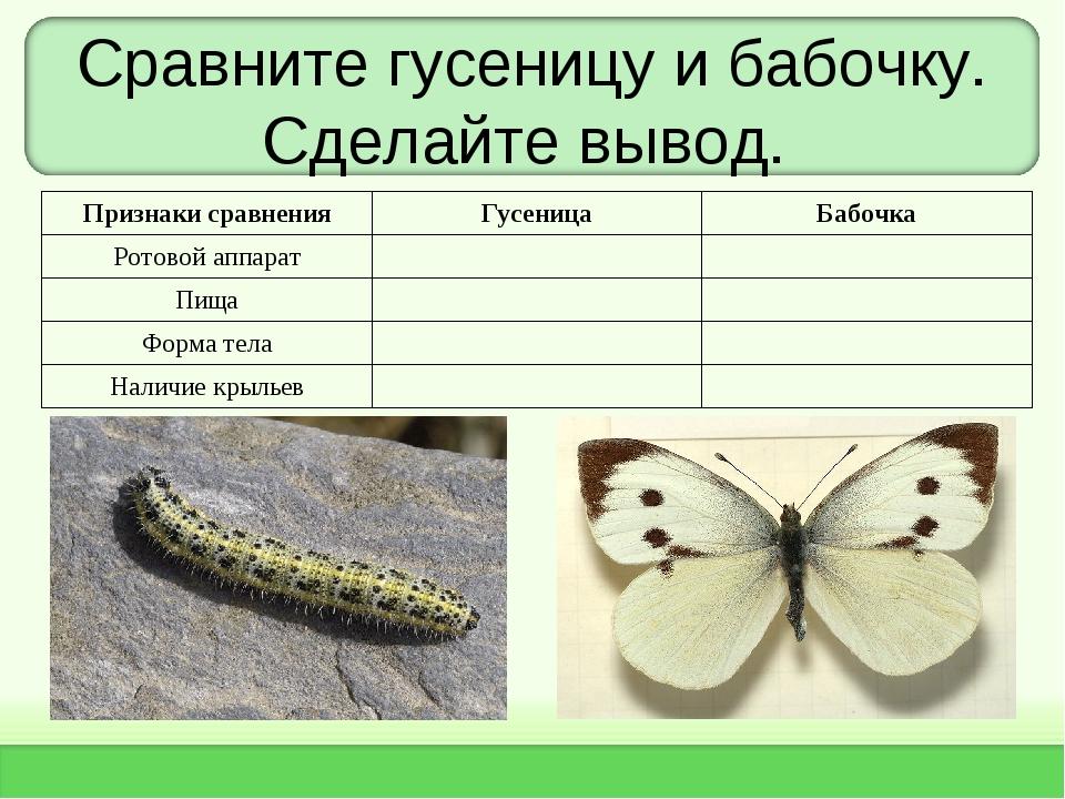Сравните гусеницу и бабочку. Сделайте вывод. Признаки сравненияГусеницаБабо...