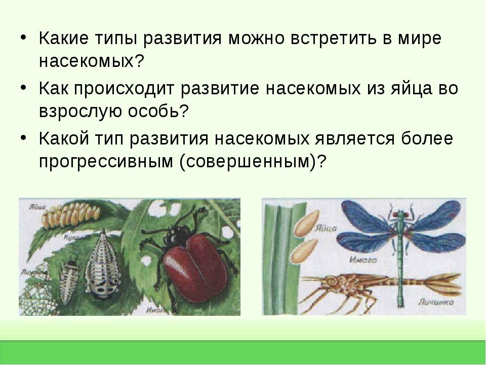 Какие типы развития можно встретить в мире насекомых? Как происходит развитие...
