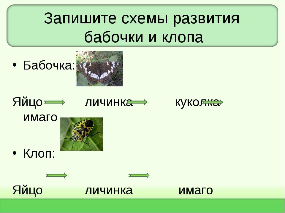 Запишите схемы развития бабочки и клопа Бабочка: Яйцо личинка куколка имаго К...