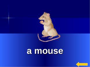 * a mouse