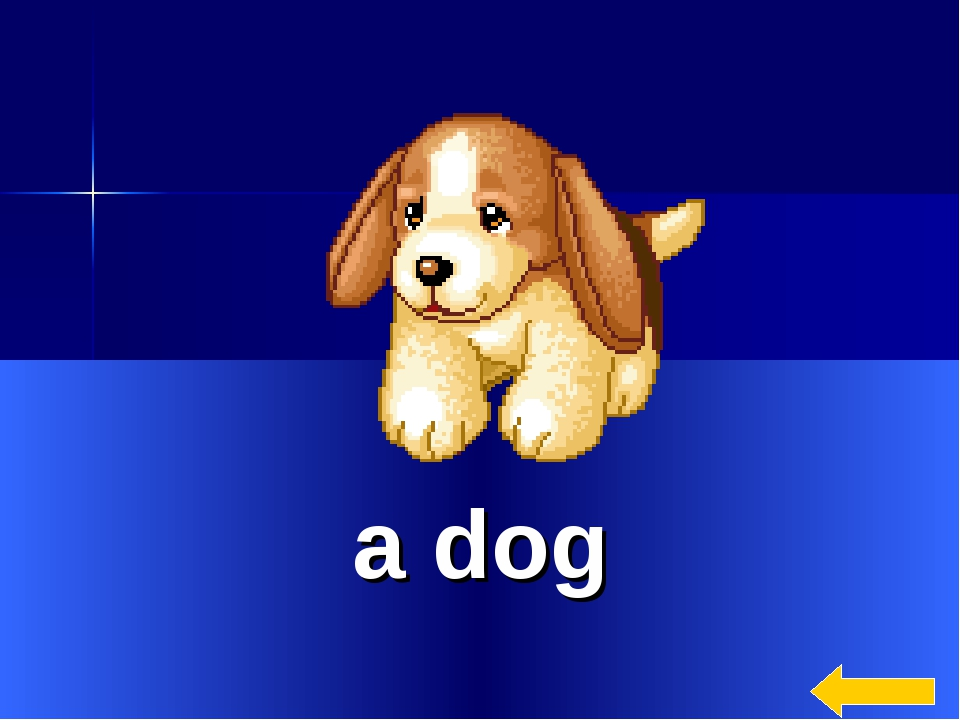 * a dog