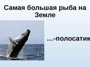 Самая большая рыба на Земле …-полосатик