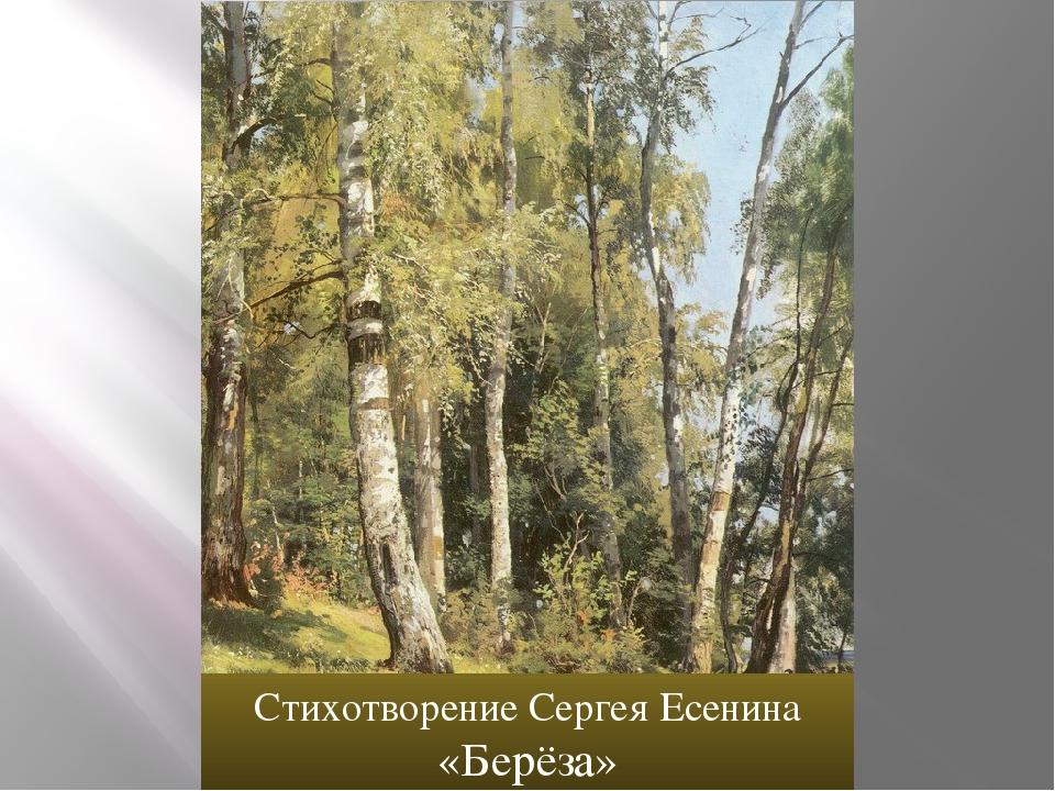 Стихотворение Сергея Есенина «Берёза»