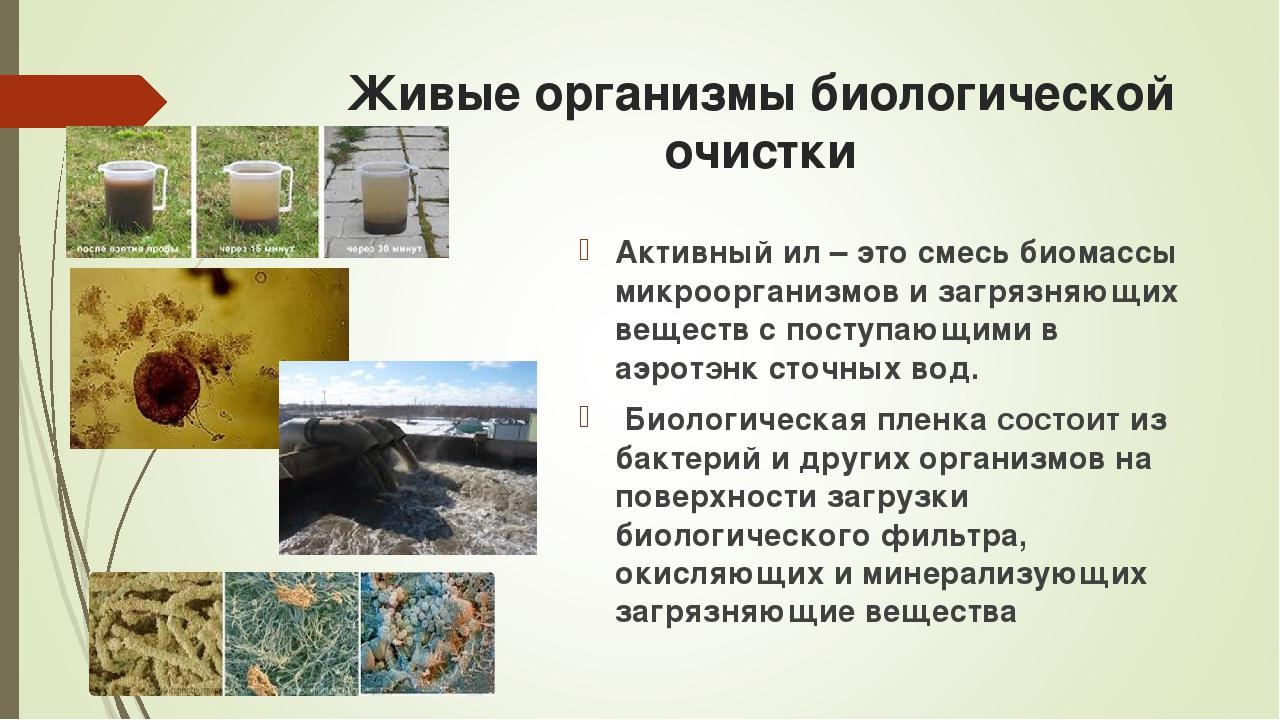 Живые организмы биологической очистки Активный ил – это смесь биомассы микроо...