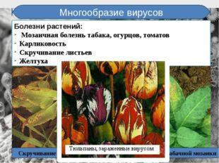 Многообразие вирусов Болезни растений: Мозаичная болезнь табака, огурцов, том