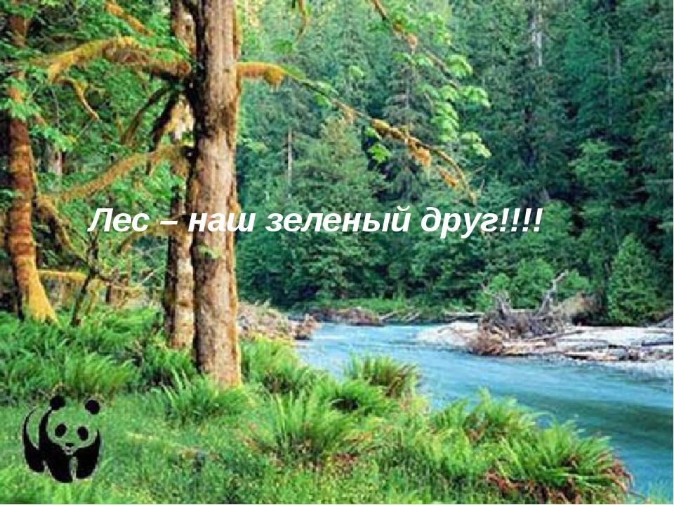 Лес – наш зеленый друг!!!! 1.