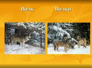 Волк Волки