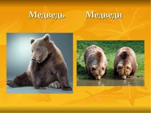Медведь Медведи
