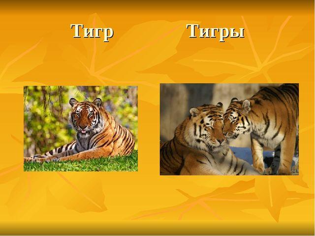 Тигр Тигры