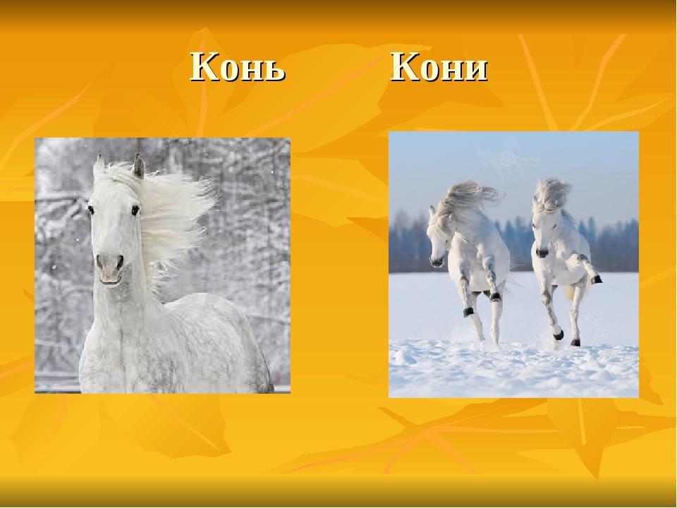 Конь Кони