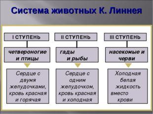 Система животных К. Линнея І СТУПЕНЬ ІІ СТУПЕНЬ ІІІ СТУПЕНЬ четвероногие и пт