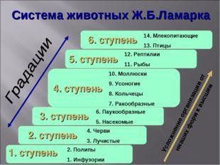 Усложнение организации от низших форм к высшим Система животных Ж.Б.Ламарка