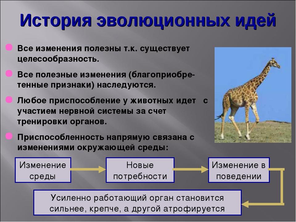 История эволюционных идей Все изменения полезны т.к. существует целесообразно...