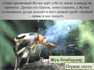 «Один крошечный Жучок идёт себе по земле и никуда не прячется. Догнал его Ще