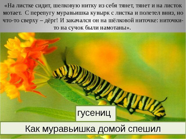 «На листке сидит, шелковую нитку из себя тянет, тянет и на листок мотает. С...