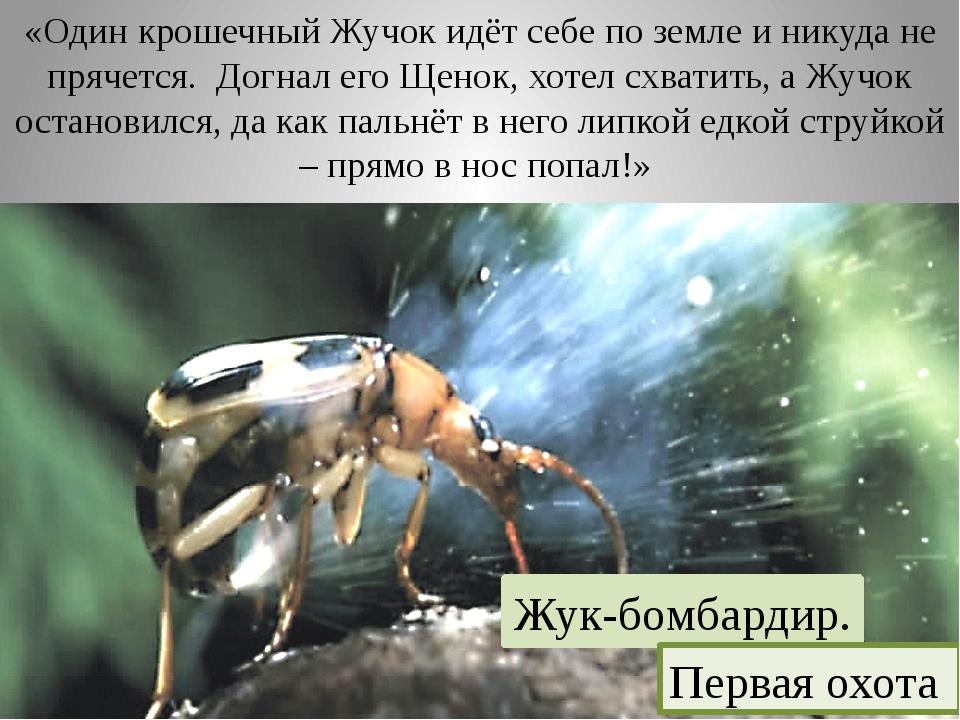 «Один крошечный Жучок идёт себе по земле и никуда не прячется. Догнал его Ще...
