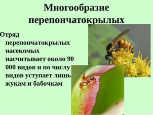 Многообразие перепончатокрылых Отряд перепончатокрылых насекомых насчитывает