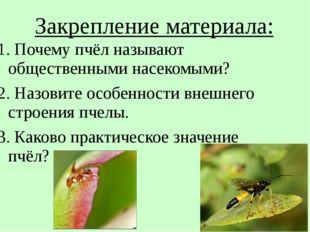 Закрепление материала: 1. Почему пчёл называют общественными насекомыми? 2. Н