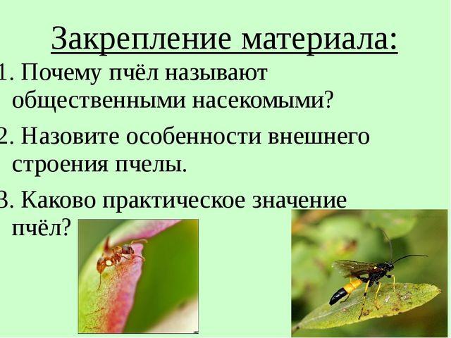 Закрепление материала: 1. Почему пчёл называют общественными насекомыми? 2. Н...