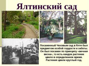 Ялтинский сад Посаженный Чеховым сад в Ялте был предметом особой гордости и з