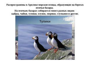 Распространены в Арктике морские птицы, образующие на берегах птичьи базары.