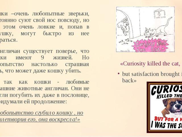 «Curiosity killed the cat, Кошки –очень любопытные зверьки, постоянно суют св...