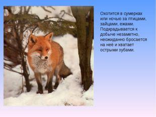 Охотится в сумерках или ночью за птицами, зайцами, ежами. Подкрадывается к до