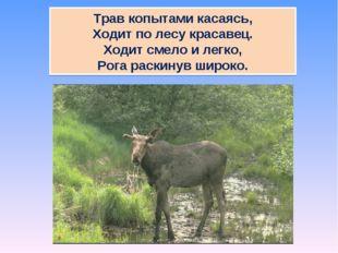 Трав копытами касаясь, Ходит по лесу красавец. Ходит смело и легко, Рога раск