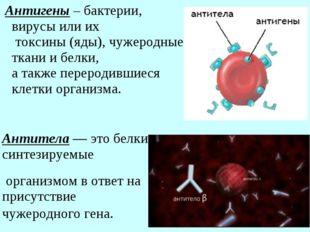 Антигены – бактерии, вирусы или их токсины (яды), чужеродные ткани и белки, а