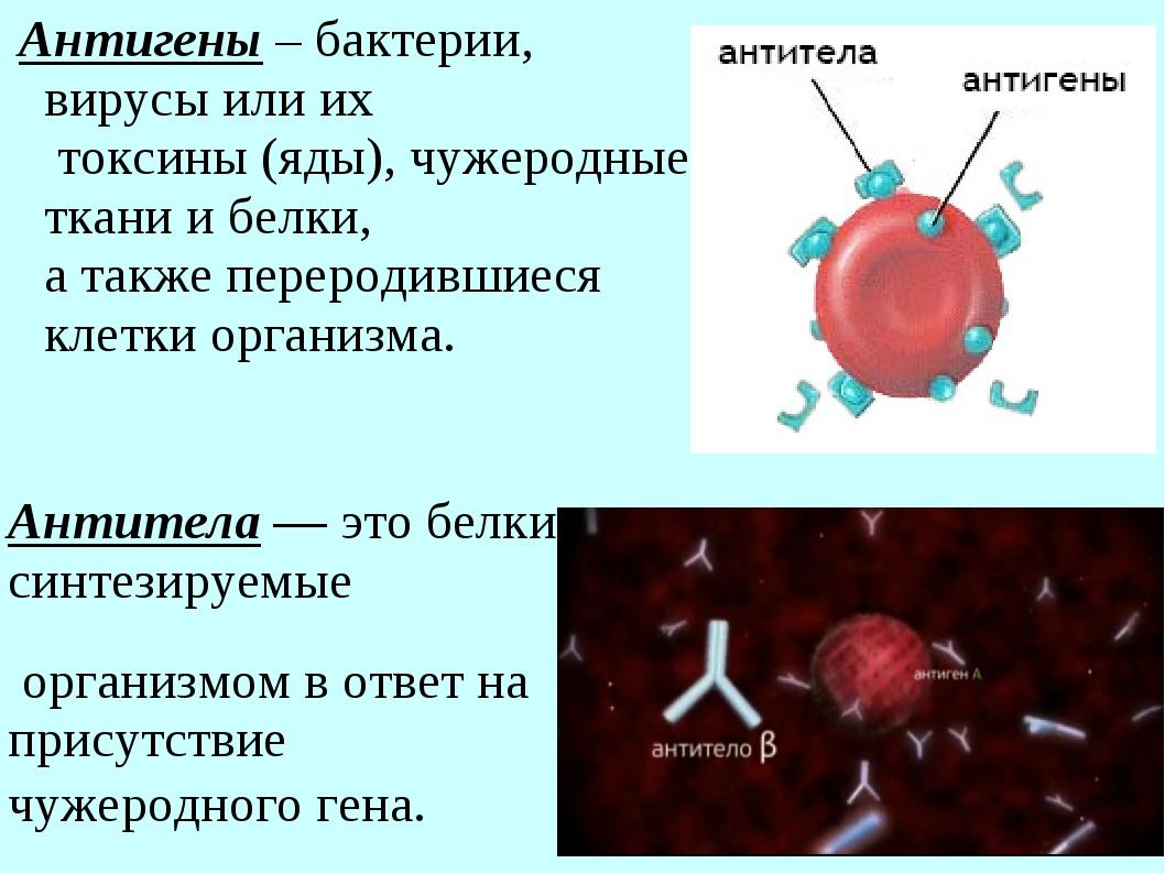 Антигены – бактерии, вирусы или их токсины (яды), чужеродные ткани и белки, а...