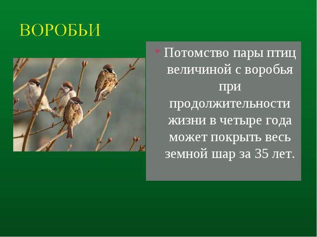 Потомство пары птиц величиной с воробья при продолжительности жизни в четыре...