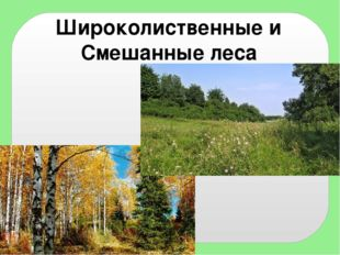 Широколиственные и Смешанные леса