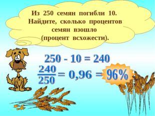 Из 250 семян погибли 10. Найдите, сколько процентов семян взошло (процент всх